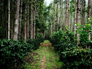 Vacation For Coffee Lovers Best Coffee Plantations Destinations In India