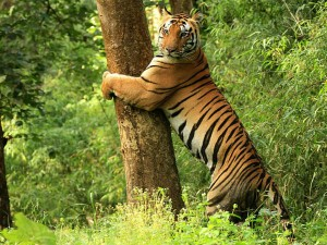 Best Jungle Safaris In North India