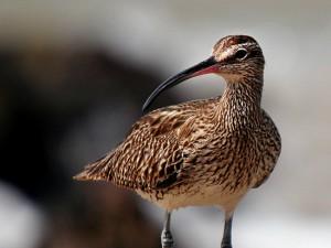 Enlighten Your Minds With The Top Bird Sanctuaries Of Kerala