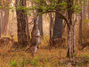 From Chennai To The Lively Atmosphere Of Nagarhole National Park