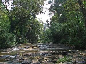 Chennai To Thekkady Experiencing The Exotic Wildlife Destination