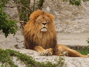 Ahmedabad To Gir Forest National Park Into The World Of Rich Biodiversity