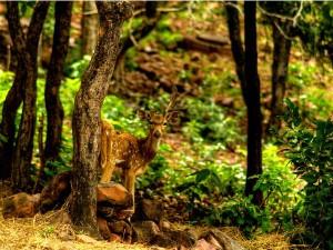 Van Vihar National Park Pass Through The Rich Biodiversity Of Bhopal