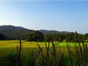 Kolkata To Duarsini Amid Rich Forests And Wildlife