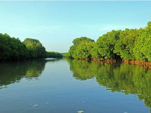 All You Need To Know About Pichavaram And Its Mangrove Forest