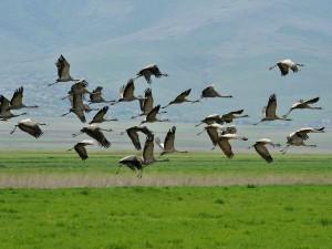 Top Birdwatching Destinations Of Karnataka