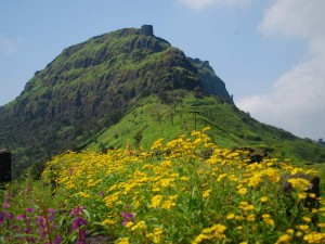 Rajgad Fort Pune Travel Guide Attractions How Reach