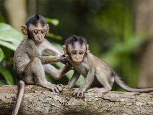 Top Wildlife Sanctuaries Of Tamilnadu