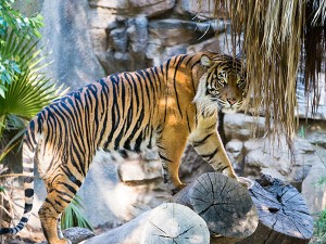 Places To Visit In Ranthambore Things To Do And How To Reac