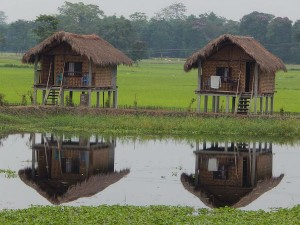 Majuli River Island Assam Things To Do How To Reach