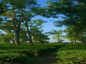 Hajo Assam Places To Visit Best Time To Visit And How To Reach