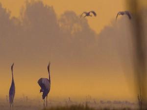 Wildlife Sanctuaries To Visit In India In December
