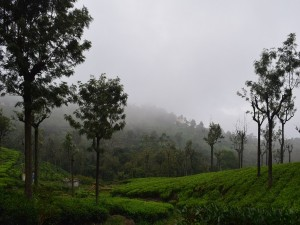 Places To Visit In Tamil Nadu In March