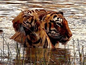 Producer Depshikha Deshmukh Shares Stunning Wildlife Images From Tadoba Andhari National Park