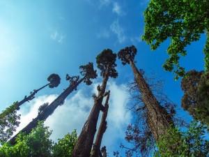 Things To Do In Darjeeling