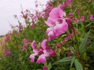 Kerala's First Orchid Garden!