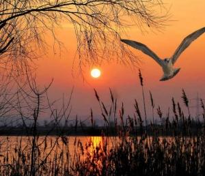 Kanwar Lake Bird Sanctuary – Defining The Natural Beauty Of Bihar