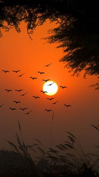Survey The Interesting Trail Of Mansa, Punjab