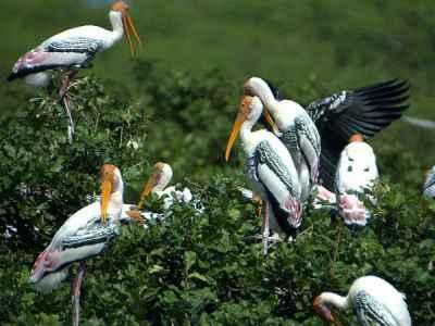 essay on vedanthangal bird sanctuary