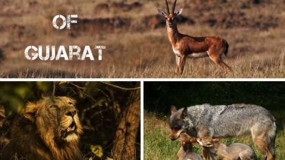 Top Wildlife Sanctuaries Of Gujarat