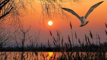 Kanwar Lake Bird Sanctuary – Defining The Natural Beauty Of Bihar