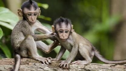 Wildlife Sanctuaries Of Tamil Nadu: Embracing The Wilderness