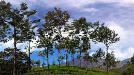 Travel To Munnar This Season!