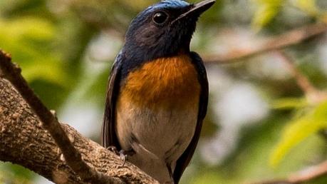 Less-explored Bird Sanctuaries Of India