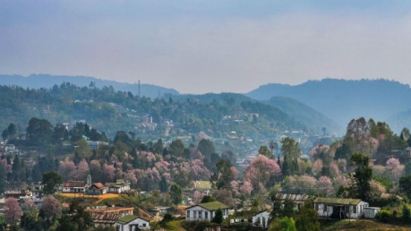 Do You Know About The Cherry Blossom Festival Happening In Shillong?