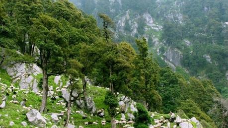 From Delhi To The 'Little Lhasa' - McLeod Ganj