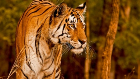 Most Visited Wildlife Sanctuaries Of India In 2017
