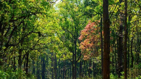 Bhopal To Kanha National Park – A Relaxing And Soulful Journey