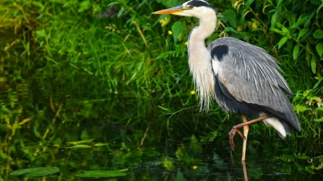 Topmost Bird Photography Destinations In Maharashtra
