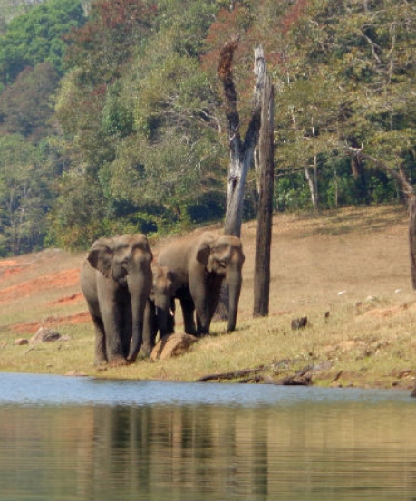 Into The Wild At Periyar National Park