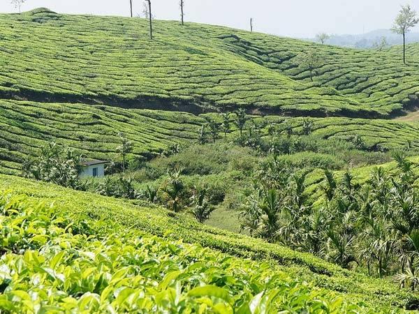 5 Best Places Visit In Kerala In December