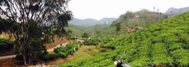 An Alternative To Munnar - Kuttikkanam