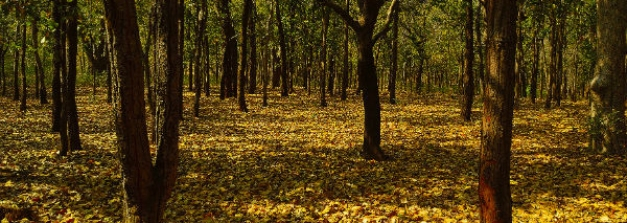 Top 5 Forests In India To Visit For Every Nature Lover