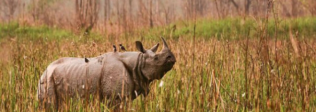 5 Places In India To Spot One-Horned Rhinos