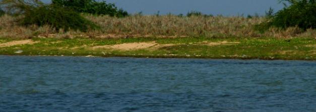 Enjoy The Pristine Lake And Birdlife At Pulicat