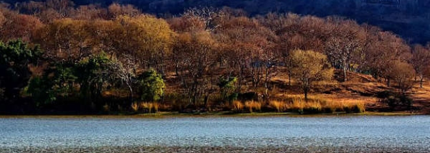 Bhopal To Ranthambore National Park – Apprehend The Beauty Of Forts And Bengal Tigers