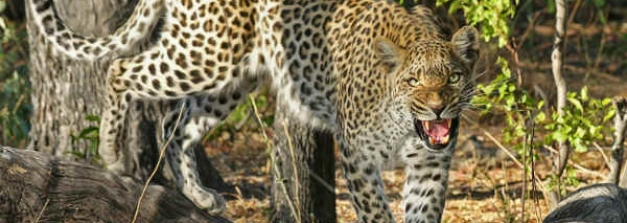 Bhopal To Ralamandal Wildlife Sanctuary – To The Magnificence Of Indore