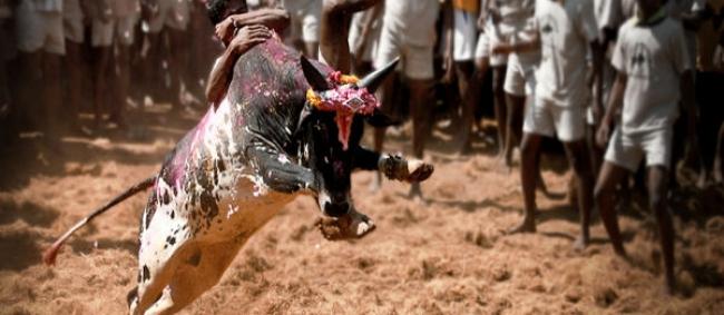 6 Places To Celebrate Makar Sankranti