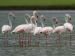 Visit the mesmerzing land of Medak,Telangana