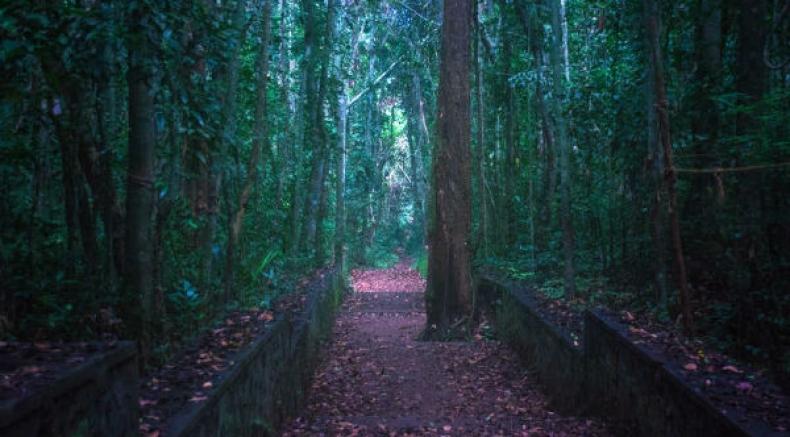 The Sacred Grove Of Iringole Kavu