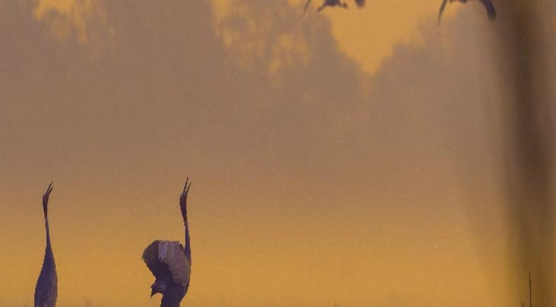 Enjoy The Tweeting Of Birds At The Keoladeo National Park