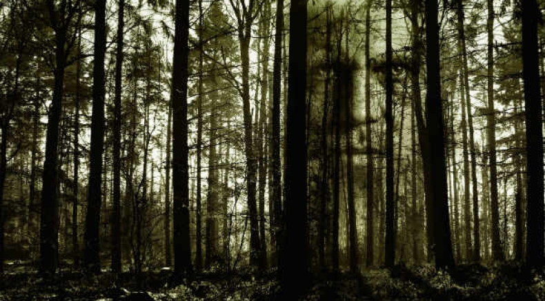 The Picturesque Pachmarhi Has A Haunted Forest? Learn All About It Here