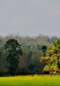 സുല്ത്താന് ബത്തേരി