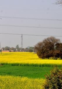 ஜஜ்ஜார்
