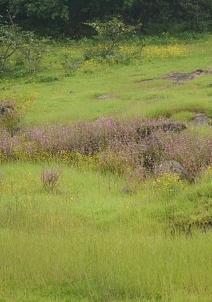ஏம்பி பள்ளத்தாக்கு