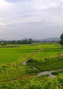 காங்கேர்